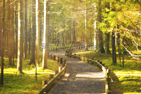 path in spring green forest on