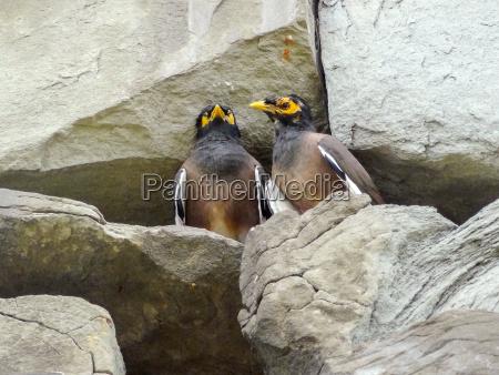 piedra animal pajaro marron asia aves