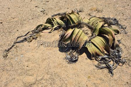 color desierto africa namibia camara al