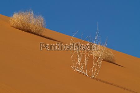 desierto fiesta vacaciones turismo africa namibia