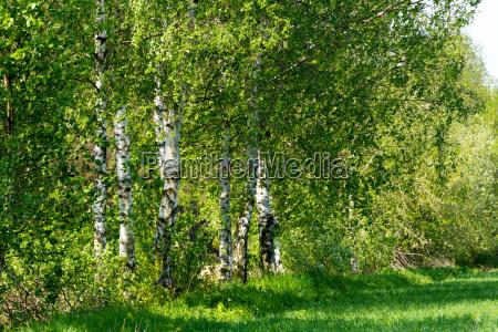 primavera paisaje naturaleza tscheche checo cesped