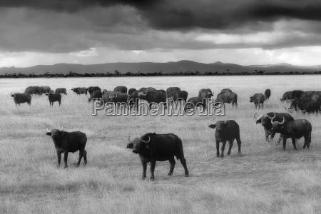 paseo viaje animal mamifero africa kenia