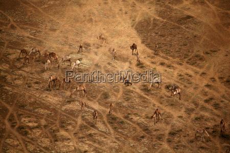 medio ambiente animal mamifero marron sabana