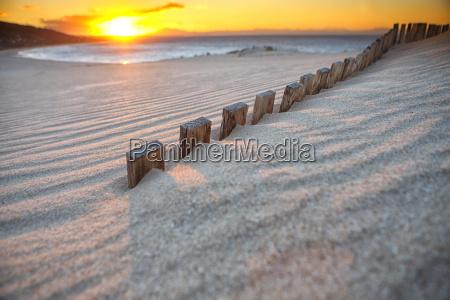bolonia duna es una duna de