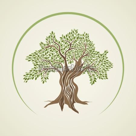 ilustracion vectorial del olivo