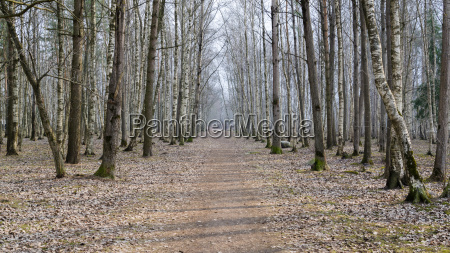 spring landscape with footpath in the