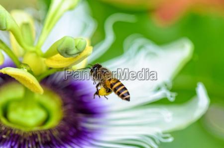 primer plano flor planta exotico volar