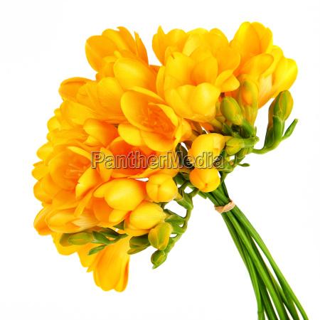 ramo de flores hermosas de color