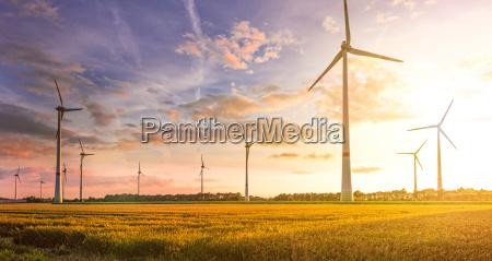 campo de la turbina de viento
