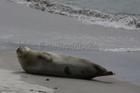 mamifero los animales playa la playa