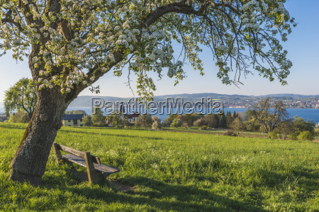 germany dingelsdorf uberling lake bench and