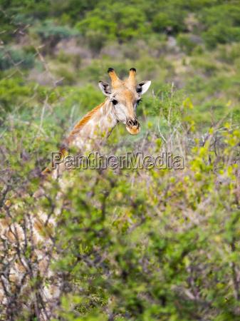 arbol parque nacional africa namibia retrato