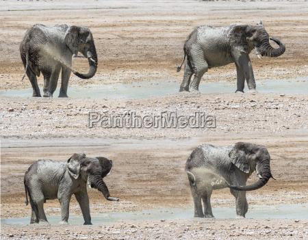 animal africa elefante suciedad al aire