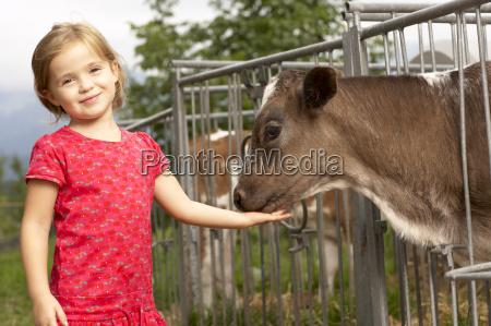 young girl petting calf
