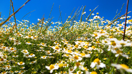 flower meadow on a sunny day