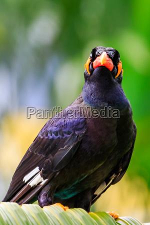 vuelo animal pajaro salvaje negro aves