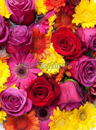 flowers tightly packed together