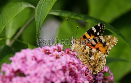 jardin insecto mariposa verano veraniego ala