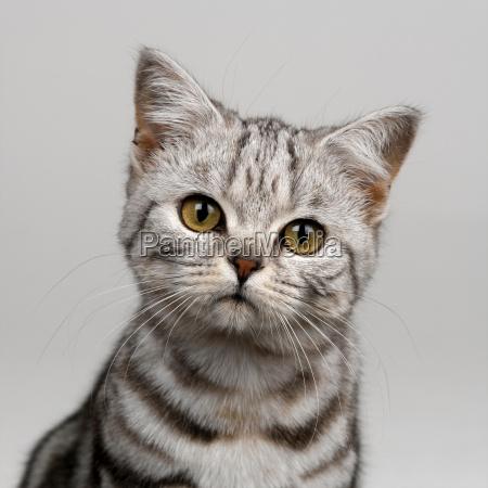 primer plano animal curiosidad retrato retrato