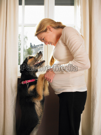 pregnant woman and pet dog