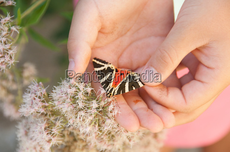 girl holding butterfly close up