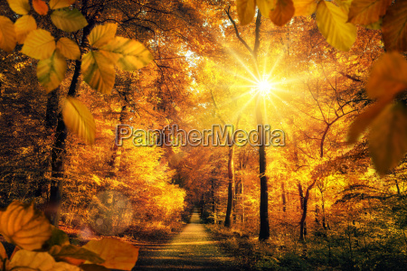 golden autumn with a lot of