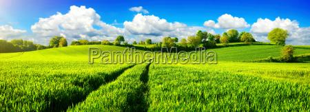idilio rural panorama con amplios prados
