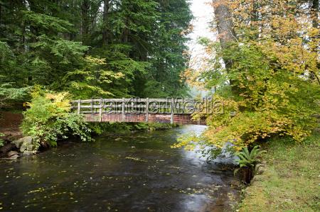 wooden bridge in silver falls state