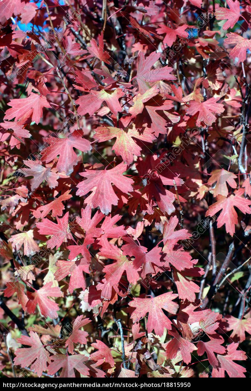 autumn, leaves - 18815950