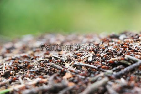 hormigas hormiguero sobras trabajan