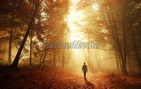 caminar en el bosque en una