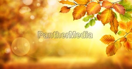 hojas amarillas decoran un fondo difuso