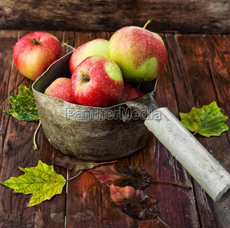 maduro fruta jugoso manzana rojo fresco