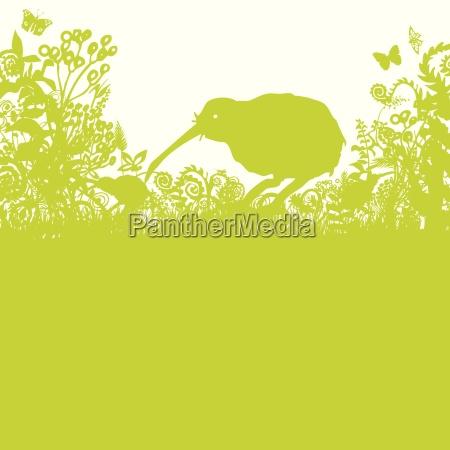 kiwi en matorral