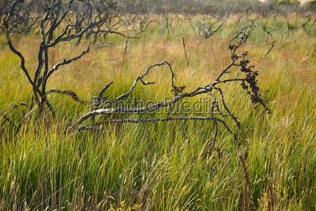 salvaje campo australia arbusto australiano prado