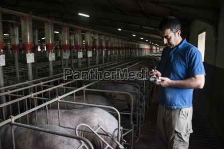 animal mamifero agricultura espanya estable granja