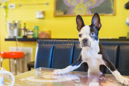 portrait of cute dog on kitchen