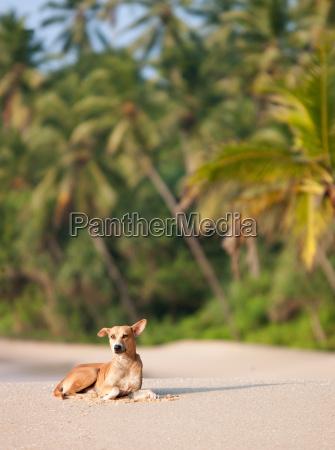 wild dog sitting on sandy beach