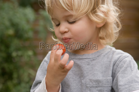 young boy eating cherry tomato