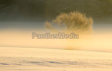 arbol invierno frio niebla helado nieve