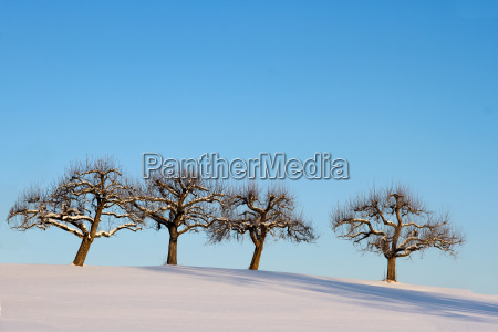 arbol arboles invierno frio manzano manzanos