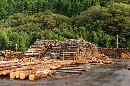 madera de pino apilada en el