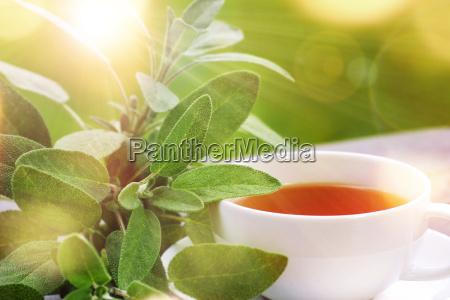 te sabio medicina luz soleado cuerpo