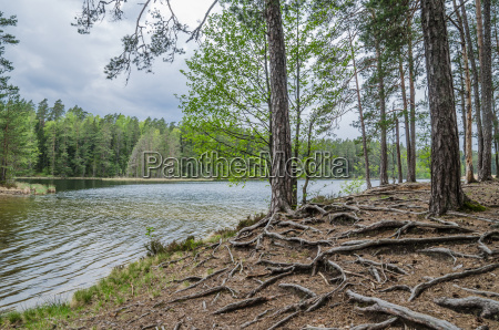 bare root trees near the forest