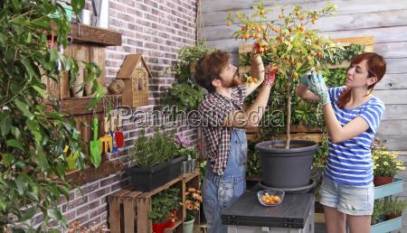 pareja recogiendo naranjitas chinas en su