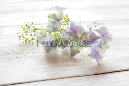 delicate flowers for a table decoration