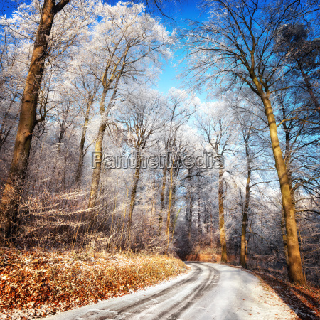 winter landscape with snowy road forest