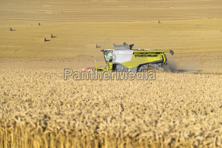 combine harvester harvesting field of wheat