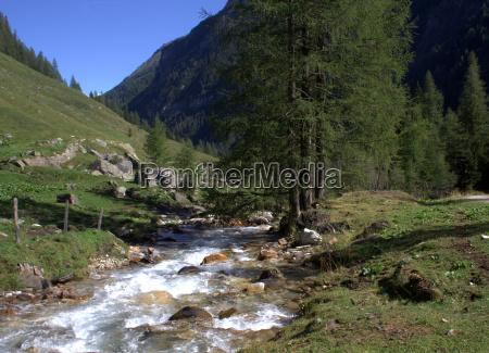 mula paisaje naturaleza agua de agua