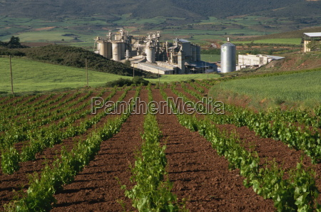 industria agricultura vinyedos europa espanya horizontalmente